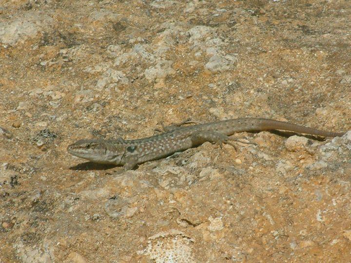 Lizard - Derek Leathlean