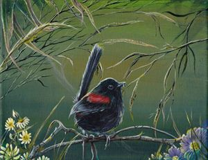 Red Back Fairy Wren - Gregory J Farrugia
