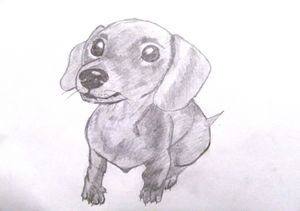 Dachshund Puppy - Natalie Pod.