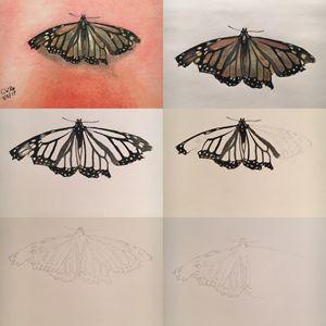 Butterfly Progress