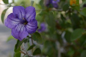 Arizona Flowers