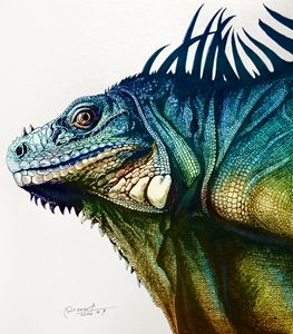 Iguana - Rlon