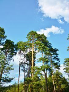 Polish Forest