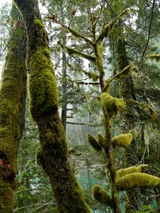 Heavy Moss on the Cowichan River