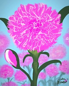 January, Carnation