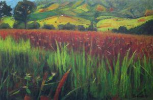 Wild red grasses