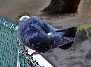 rockbird on a fence