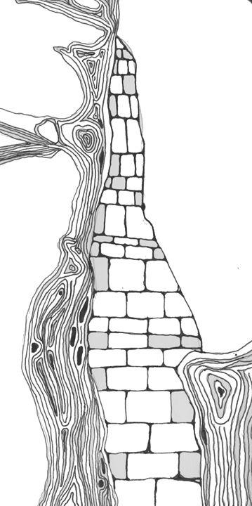 Mapel Tree - Jonti