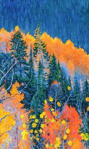 Colorado Trees at Fall