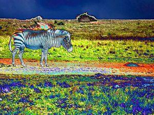 Colour Zebra