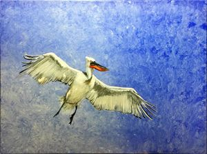 Pelican against a blue sky