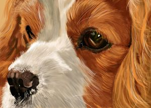King Charles Spaniel Up Close and Pe - Dogone Art