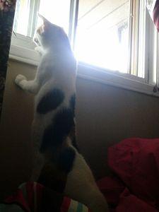 Whats outside!?