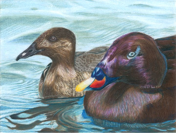 Ducks 2016 - Gabby