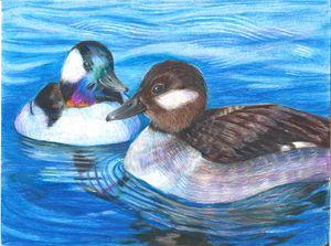 Ducks (2015)