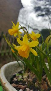 Birth of Spring