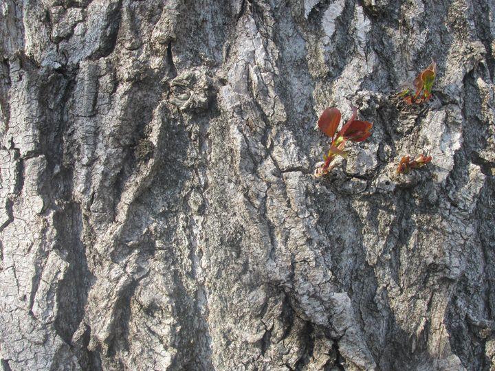 "Tree Bark ""Wallpaper"" - Stylo"