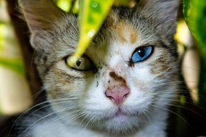 Pussy Cat Potrait