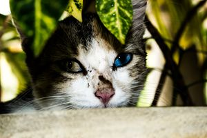 Cat hides in flower Pot