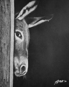 Peek-A-Boo Burro