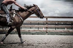 Galloping Horse Photography Print