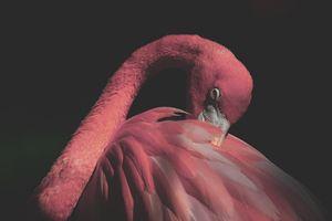 Pastel Pink Flamingo Photo Print