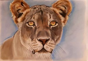 Lioness - SOLD