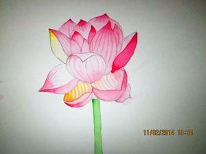 lotus......