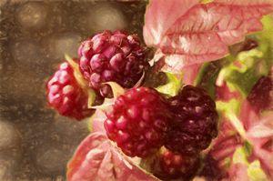 painted rasberries