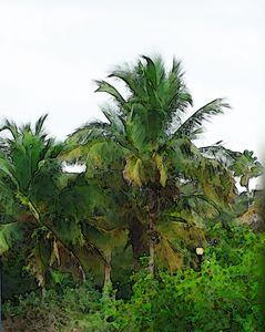 PALM TREE BREEZE