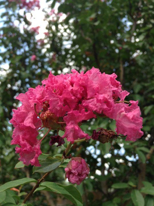 bloom - anna's art