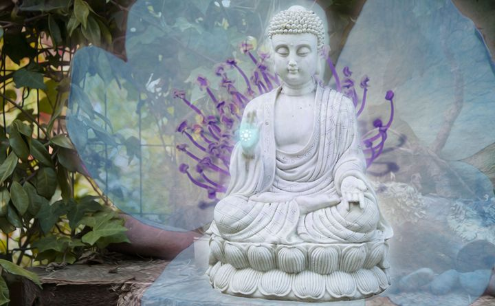 Big Buddha Blessings - Empty Cup Gallery
