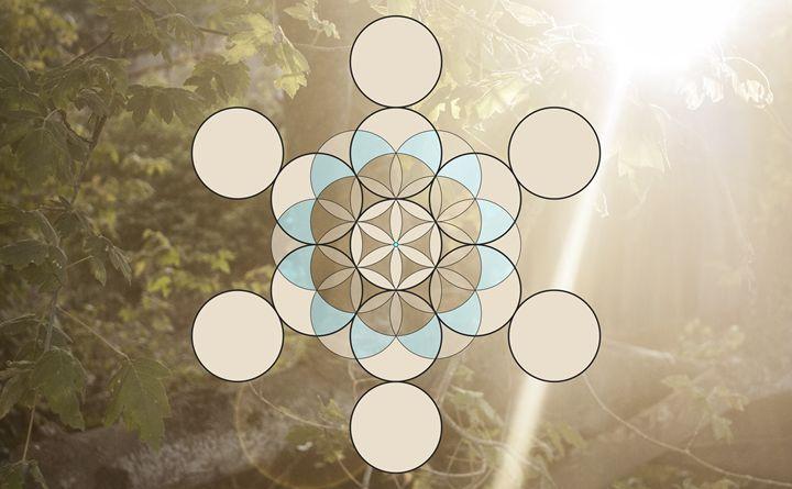 Sunlight Sparrow Mandala - Empty Cup Gallery