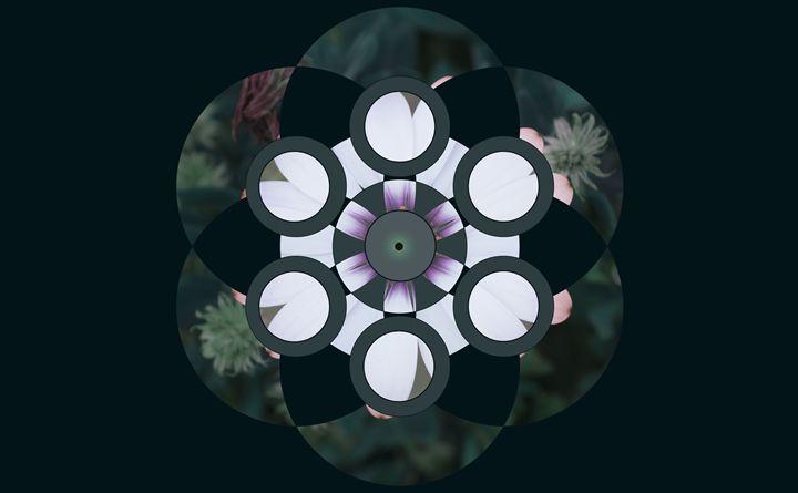 Deep Sea Mandala - Empty Cup Gallery