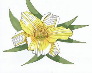 Yellow Lily - MK Nature Design