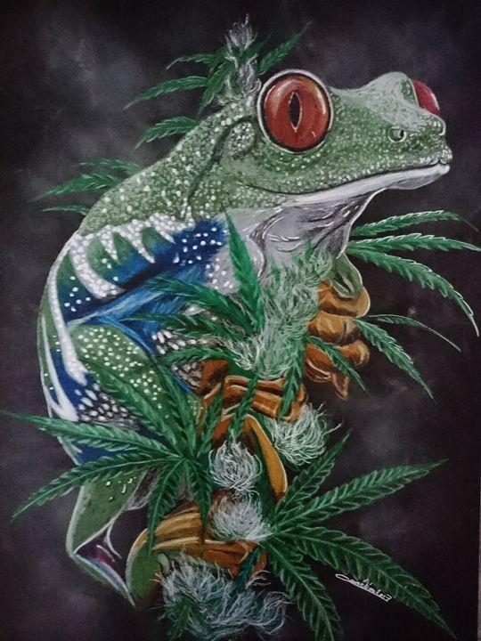 cana frog - The Chameleon