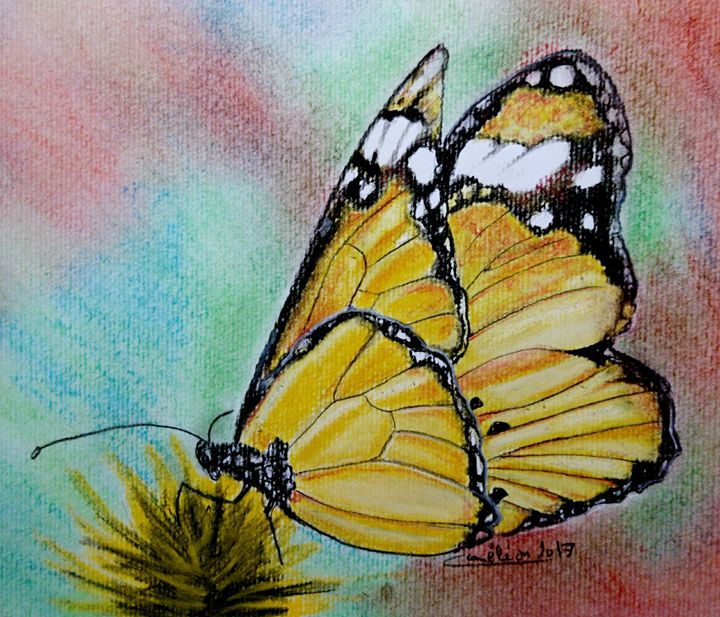 Butterfly - The Chameleon