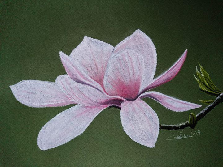 magnolia for ever - The Chameleon