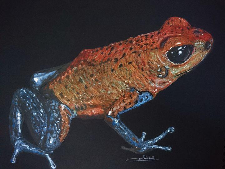 Rain forest frog - The Chameleon