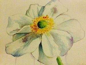 Japanese Windflower