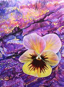 Pansy Blossom