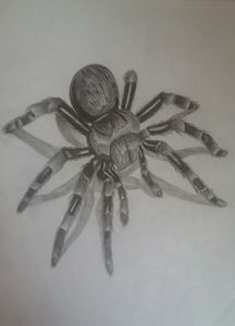 Spider 3d pencil drawing