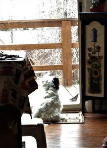 Watching It Snow - SLPeders