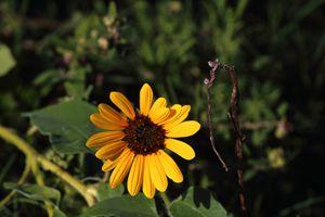 Galveston Flower