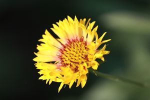 Deep inside flower
