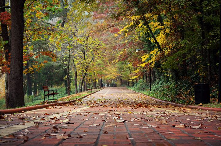 A walk in the park - Stephanie Crews