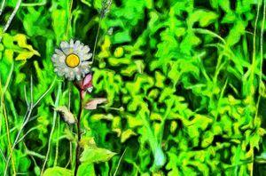 Lonely chamomile - Digital brush