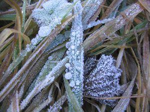 Frosty Droplets - dizzeelizzee