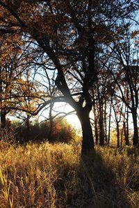 Woods at Dawn #2