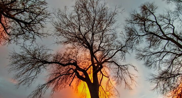 Sunset Trees - Crystal V Photography